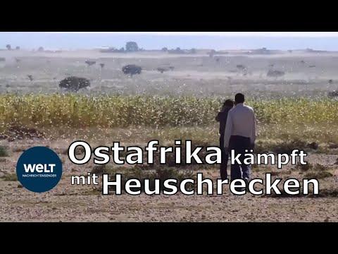 Heuschrecken-Invasion bedroht Ostafrika mit Hungersnot