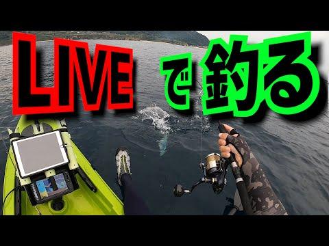 カヤックLIVEで300人と一緒に釣りを楽しむ【釣行46】 видео