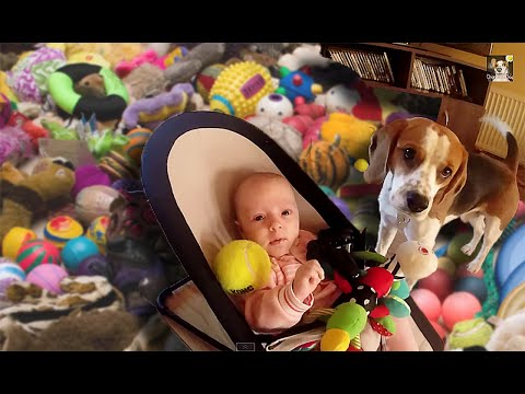 Guilty Dog Apologizes To Baby With Toys! | What's Trending Now