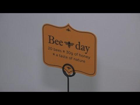 Πρώτος επίσιμος εορτασμός της Παγκόσμιας Ημέρας Μέλισσας