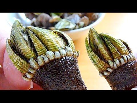 這位日本人試吃超獵奇食物「龜之手」,壓碎殼取出肉那一幕只有心臟最大顆的人才能看下去!