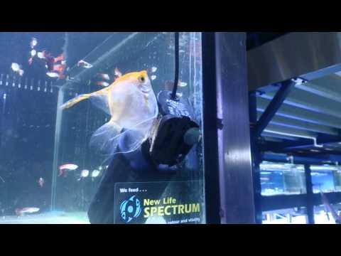 xxx TABASCO xxx - By Paul Talbot http://www.majestic aquariums.com.au.