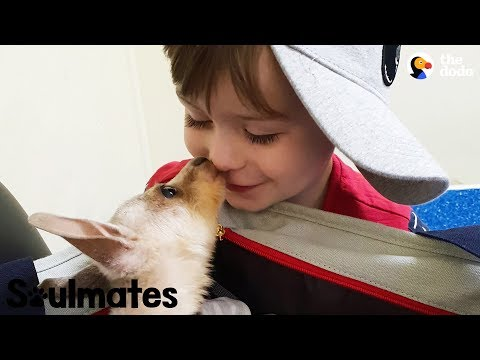 Boy And His Baby Kangaroo Are Inseparable | The Dodo Soulmates