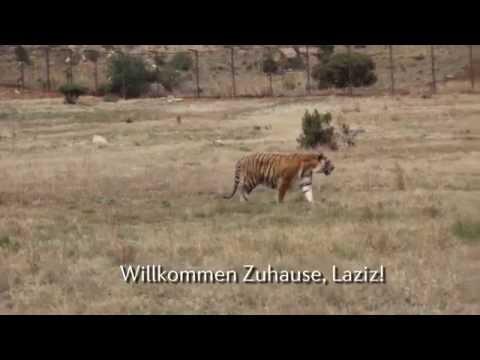 Laziz: Nach Zoo-Leben, endlich leben in der Natur!