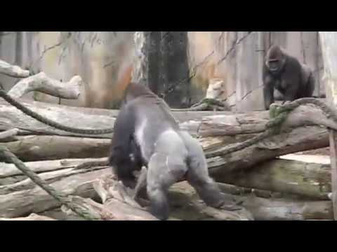 Mp4 zoo porn