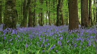 Прекрасная релаксирующая музыка леса