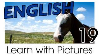 English Farm Animals Vocabulary, Learn English Vocabulary With Pictures
