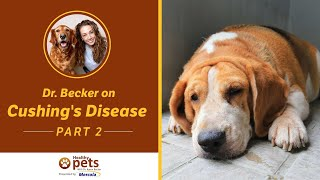 Cushing's Disease | Dog Spaying and Neutering (part 2 of 3)