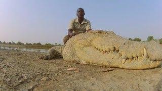 ワニを神として崇拝。ワニと人が仲良く暮らす西アフリカの村