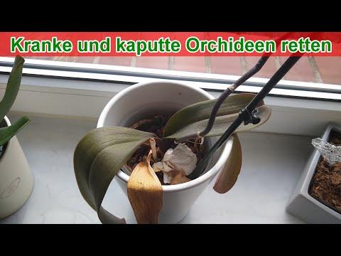 Kranke und kaputte Orchideen retten (Anleitung / Blätt ...