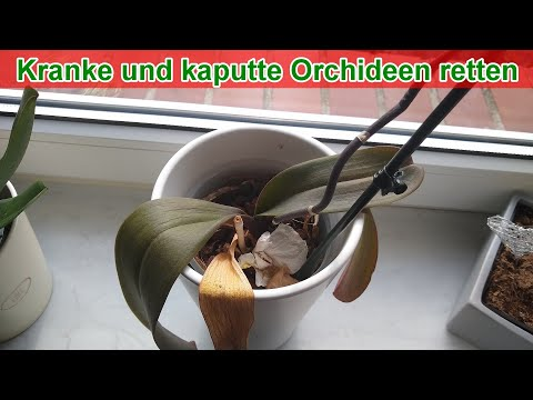 Kranke und kaputte Orchideen retten (Anleitung / Blät ...