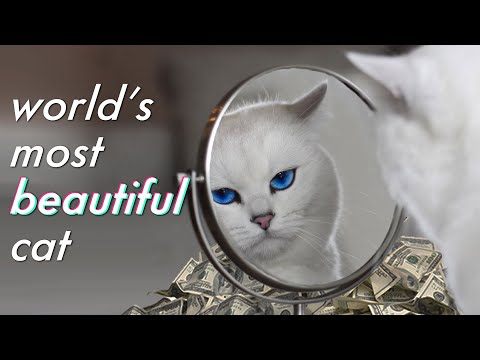 Meet the Highest Paid Cat in the World