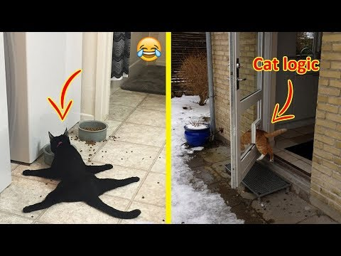 Hilarious Examples Of Cat Logic 😂