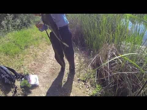 Bass Fishing in Palo Alto's Pearson Arastradero Preserve Pond