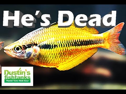 Aquarium Fish Keeping LEGEND is DEAD_Akvárium. Heti legjobbak