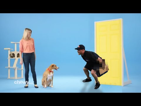 If Commercials Were More Realistic Chewycom