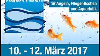 Hi Leute,hier dann mein Messebericht zur Aqua-Fisch 2017.Danke an meine Messefamilie und an jeden Zuschauer den ich die Ehre hatte kennen zu lernen und wieder zu sehen....es war mir wie immer ein außerordentliches Vergnügen :).Hier geht's zu den Fischkissen :http://emitoys.de/products/grid?category=62858Hier geht's zum Video vom letzten Jahr :https://www.youtube.com/watch?v=-iBUcy7mYF4Hier geht's zu meinem FB-Profil :https://www.facebook.com/stormy.buchheitHier geht's zu meiner FB-Seite :https://www.facebook.com/Tobis-Aquaristikexzesse-1453094571634216/Hier geht's zu meinem Twitterprofil :https://twitter.com/BuchheitTobiasHier geht's zu meinem Instagramprofil:https://www.instagram.com/tobisaquaristikexzesse/Hoffe das Video gefällt euchViele liebe GrüßeTobi