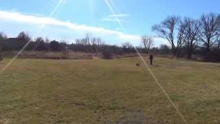 Australian Shepherd Training Off Leash. Suburban K9 (Chicago)