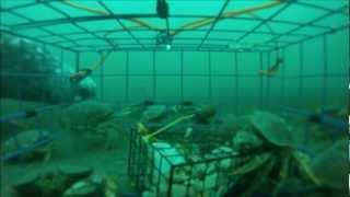 Victoria (BC) Canada  City new picture : Crabbing in Victoria, BC, Canada