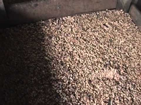 Increase Cocoa Production pt2 of 4
