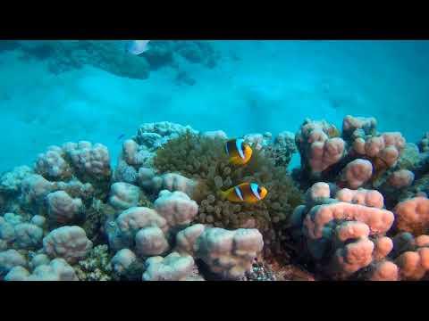 Marsa Shagra Marine Biology