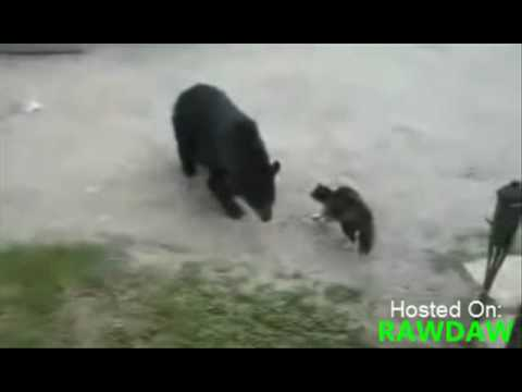Cat Defends Mother And Son From Grizzly Bear!
