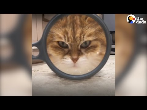 """ecco i gatti """"spia""""...impossibile notarli!"""