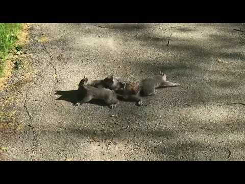 Squirrel King in Bangor, ME