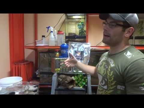How to Set Up and Care for CRESTED GECKOS
