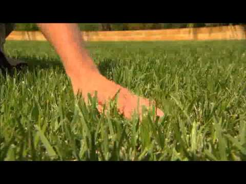 how to fertilize empire zoysia