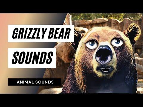 Vídeos engraçados - How A Grizzly Roars - Sound Effect - Animation