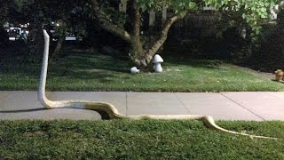 14 Scariest Snake Pictures Explained