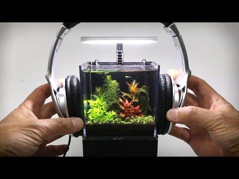 Tiny plant Aquarium - 5 Week Update - Thời lượng: 11 phút.