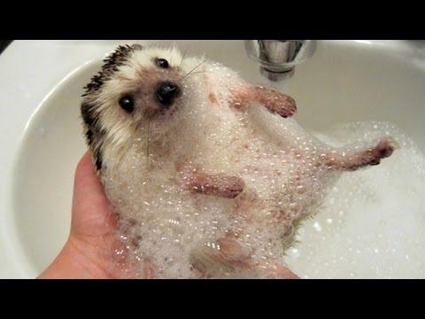 Funny ANIMALS make us laugh - Funny animal compilation (видео)
