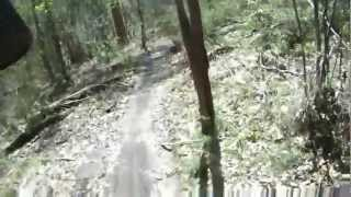 Daisy Hill Australia  City pictures : turning japanese trail at Daisy Hill.MOV