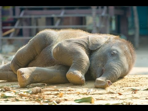Elephant Wakes Up at the Santa Barbara Zoo