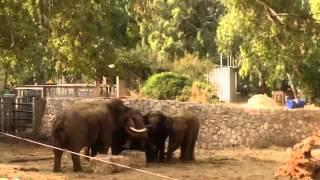 איך הגיבו הפילים בספארי ליללות אזעקת המלחמה?