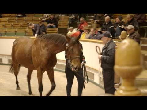 Tattersalls December Mare Sale 2015 Day 1 Video Review