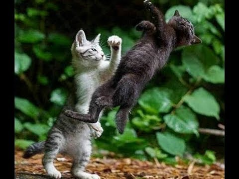Funny cat videos - Epic Funniest Cat Fight Videos Compilation 2018  TimeSquad