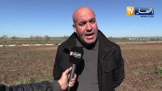 393 ألف هكتار من البطاطا مهددة بالتلف بولاية البويرة