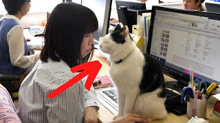 Cats Adopted By Office Have One Unsuspected Impact On The Workers by Did You Know Animals?