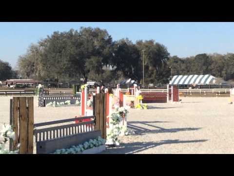 Equitation Horse for Sale NJ, PA, FL