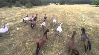 Horde de chevaux - Trailer 2015 - 4K