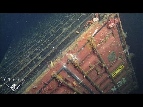 containers - Thousands of shipping containers are lost from cargo vessels each year. Many of these containers eventually sink to the deep seafloor. In 2004, researchers a...