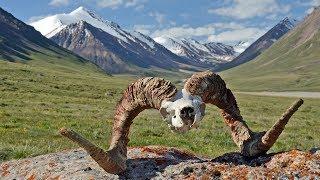malá ochutnávka 50 obrázků z Kyrgyzstánu.