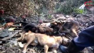 17 Dead Bodies of Dogs Buried Respectfully