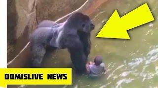 KILLING HARAMBE Gorilla Shot & Killed After Boy Falls Into Zoo Enclosure NEW VIDEO