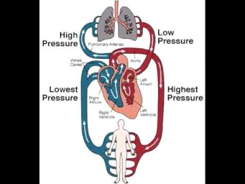 What is function of the Open Circulatory System ?