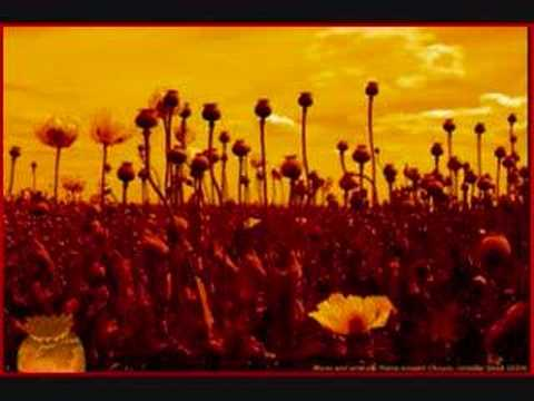Tekst piosenki Marcy Playground - Opium po polsku