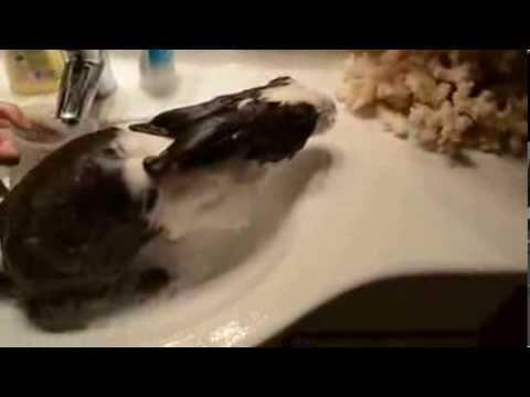 Konijn neemt relaxerend bad.